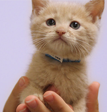 kitten-adopt-rescue-winnipeg