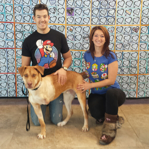 tripawd shelter dog with new owners