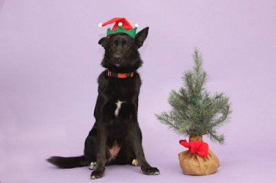 Dozens of dogs looking for homes for the holidays   Winnipeg