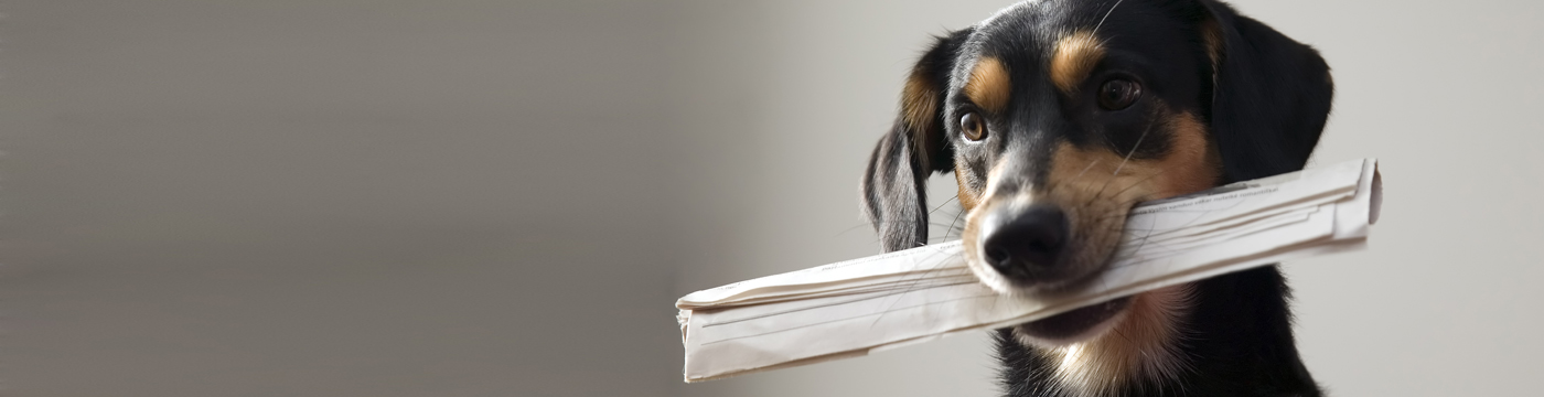 Dog with newspaper in mouth
