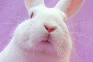are you ready for a rabbit