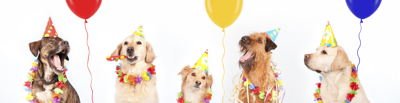 Party dogs banner