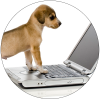Puppy-using-laptop