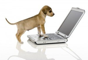 Puppy using laptop