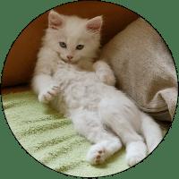 pet-friendly-housing