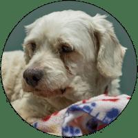 puppy-mills-circle