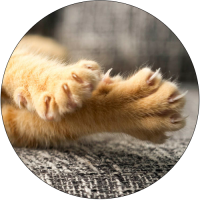 truth-about-declawing