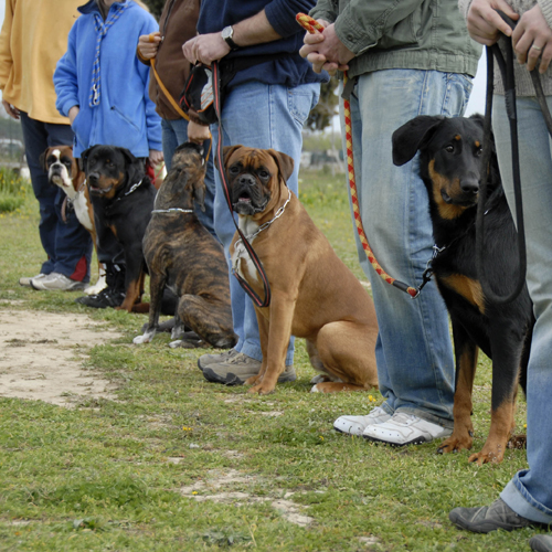 training with dogs