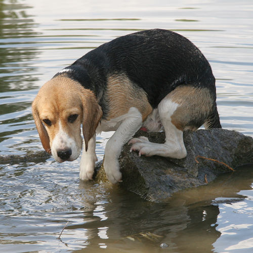 dog trapped on water