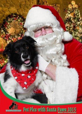 Pet Pics with Santa Paws @ The Winnipeg Humane Society | Winnipeg | Manitoba | Canada