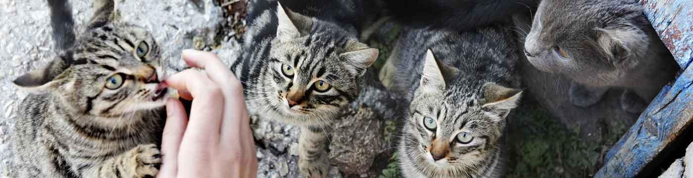 Cat-Overpopulation-banner_C