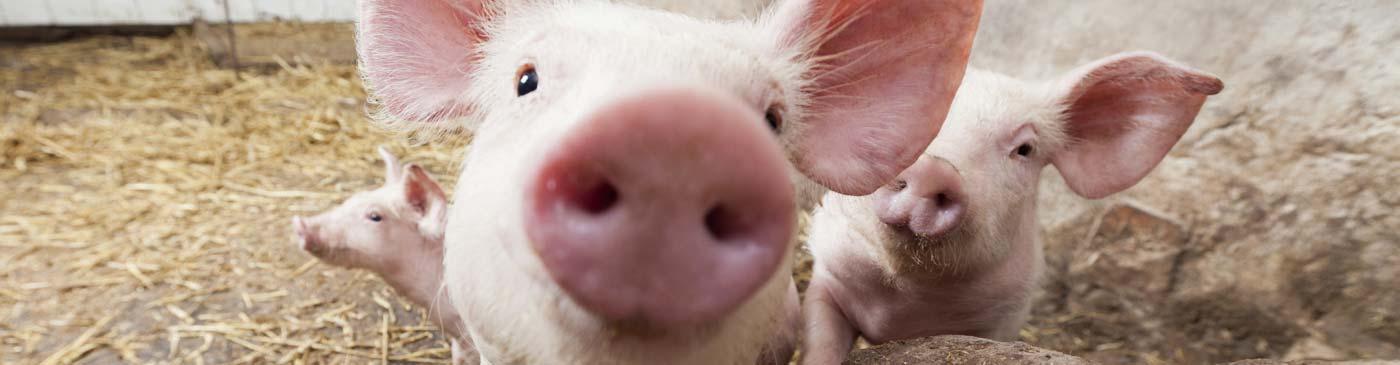 Farm-Animal-Welfare-banner_C