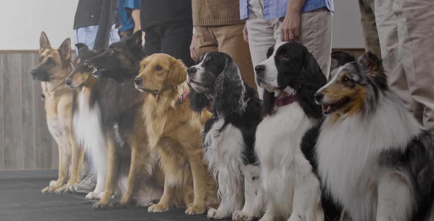 dog obedience slider