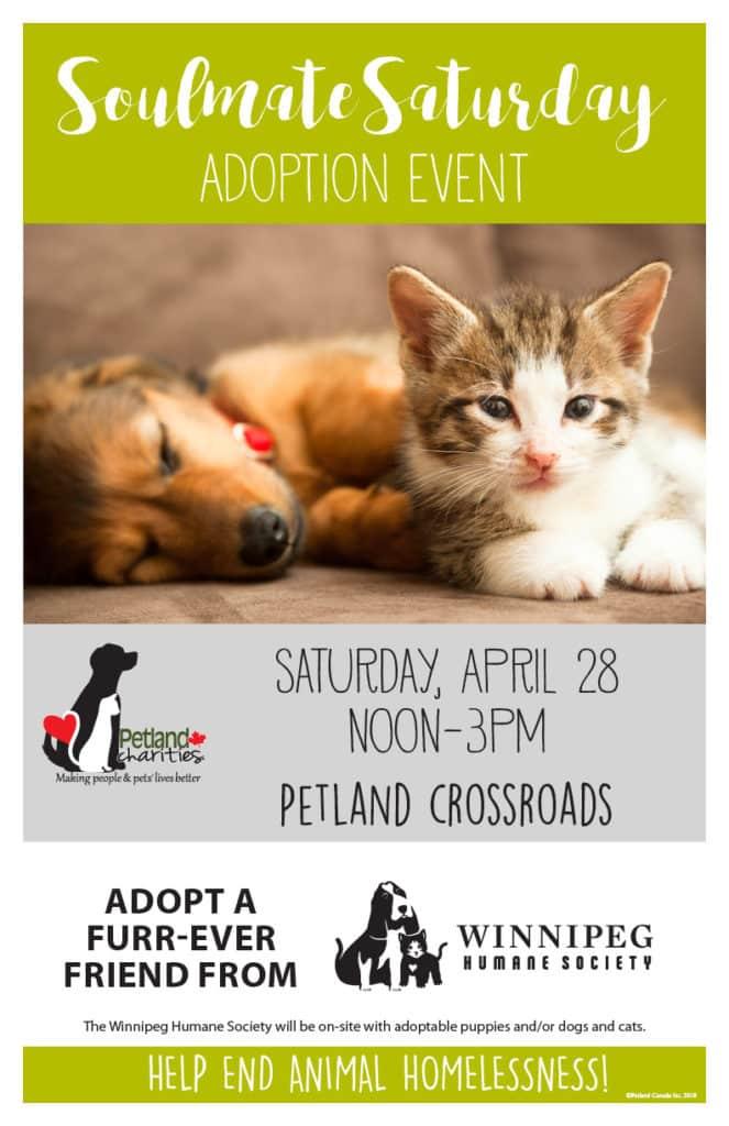 soulmate saturday adoption event