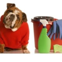 Dog Care and First Aid