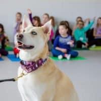 Dog in classroom
