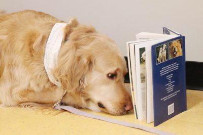 2020 Book & DVD Sale @ Winnipeg Humane Society